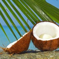 coconut-palm-tree2